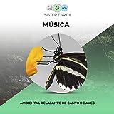 Música Ambiental Relajante de Canto de Aves
