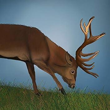 The Lone Buck