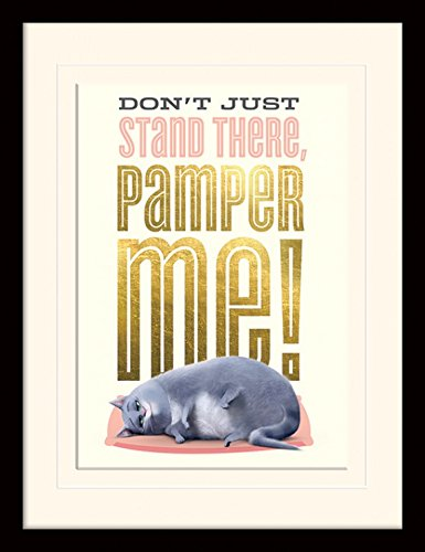 1art1 Pets - Pamper Me Gerahmtes Bild Mit Edlem Passepartout   Wand-Bilder   Kunstdruck Poster Im Bilderrahmen 40 x 30 cm