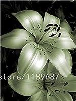 100個/バッグ希少ユリの種子、ユリの球根ではない、それは種です、盆栽ユリの花の種、心地良い香り、家庭用&ガーデン5
