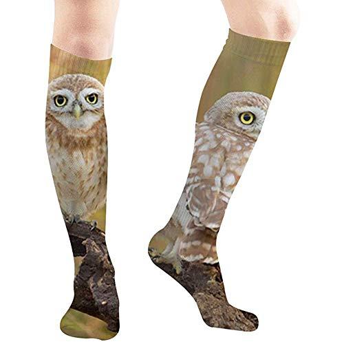 Joy Edward Kleine Eulen-Familien-Porträt-Tier-Eulen-zufällige Socken Athletische Socken für den Sport der Frauen und der Männer, Reise