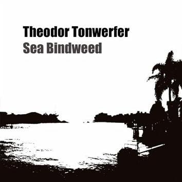 Sea Bindweed