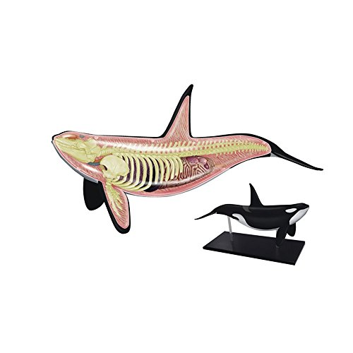 Orca Whale Educational Toy