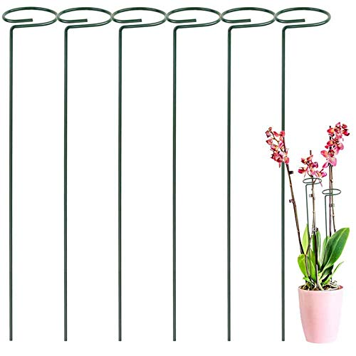 Pflanzenstütze mehrjährige Pflanzenstütze 6 Stück Strauchstütze Stahlgarten Einzelstammstützring für Pflanzen, Blumen (40 cm)