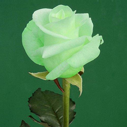 Inovey 100 Pcs Jardin Rose Graines Fleur Bonsaï Vivace Plantes Semences Coloré Décoration Fleur - 1
