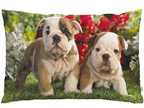 EKOBLA Throw Pillow Cover Cute Bulldog Animal French Puppies Lovely Pet Funny Little Puppy Playing On The Lawn Decor Lumbar Pillow Case Cushion for Sofa Couch Bed Standard Queen Size 20x30 Inch