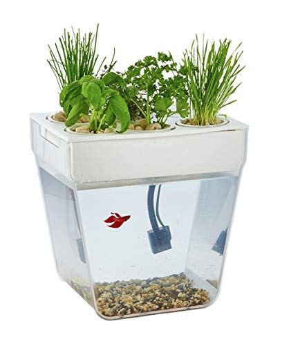 Where to Put Fish Food and Water Bowls