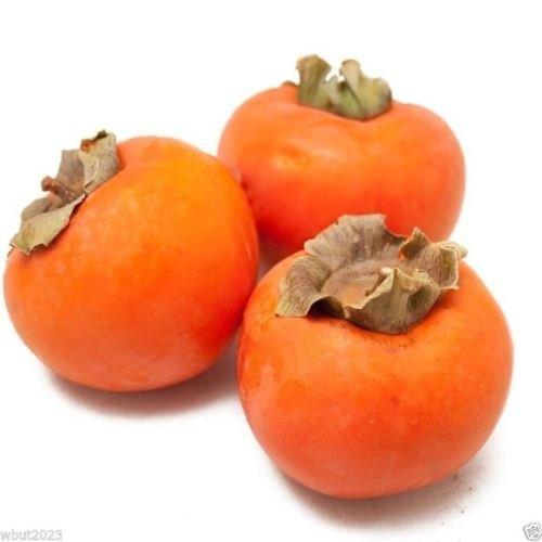 Japanische Persimmon, (25 Samen) Asian Persimmons (Diospyros kaki-Fuyu) Baum Strauch
