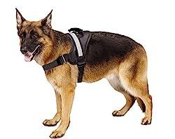 Best Harnesses for Huskies