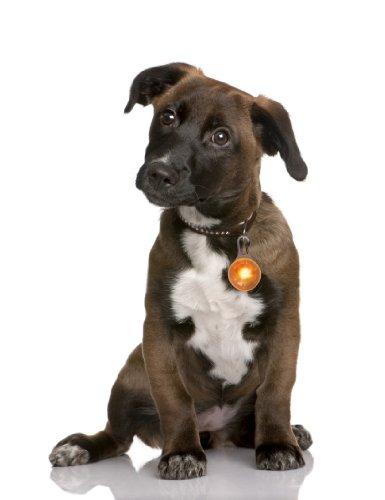 PRECORN Luz Pendiente del LED Collar de la Luz Llevó el Collar de Perro en Naranja/Marca