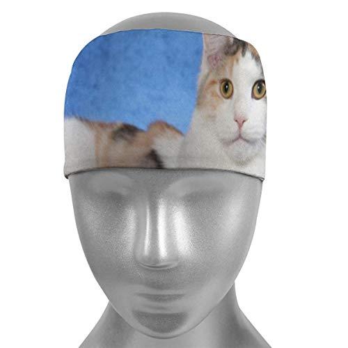 ZWHSY Venda Cute Cat Blue Sofa Soft Sports Headbands,Wicking Stretchy Quick Dry Breathable Sweatband,Non Slip Absorbing Moisture Elastic Head Band for Men Women