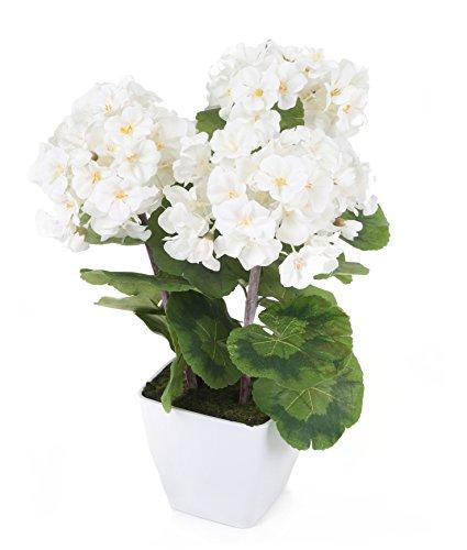 Closer To Nature FP023WS - Planta de Geranio Zonal, 37 cm, color blanco