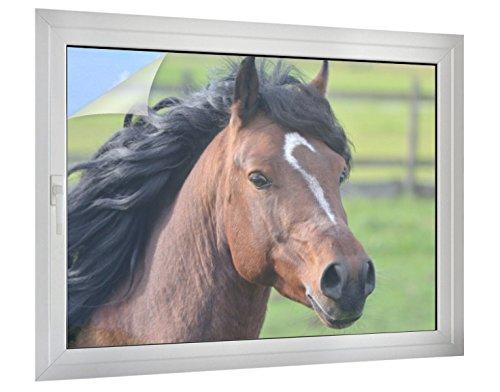 Klebefieber Sichtschutz Wildes Pferd B x H: 80cm x 60cm