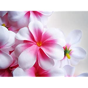 (12) White Pink center Hawaiian Plumeria Frangipani Silk Flower Heads – 3″ – Artificial Flowers Head Fabric Floral Supplies Wholesale Lot for Wedding Flowers Accessories Make Bridal Hair Clips Headbands Dress