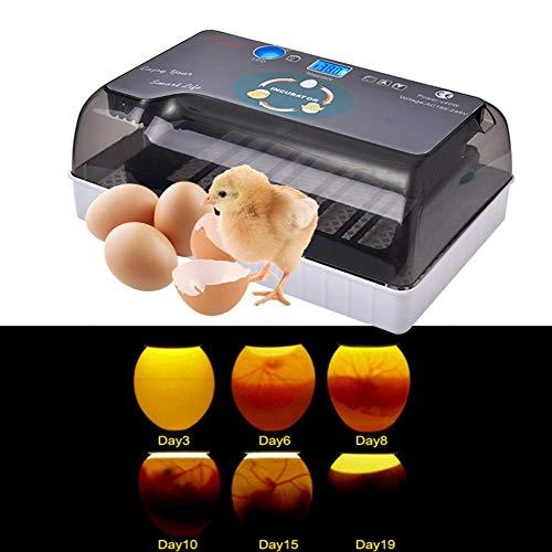 Ruier-hui Eier Inkubator Automatisch mit Effizienter LED Beleuchtung,Vollautomatischer Inkubator Brutkasten Motorbrüter Brutmaschine Hühner,35 Eier