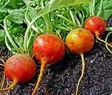 Seed Kingdom Beet...image