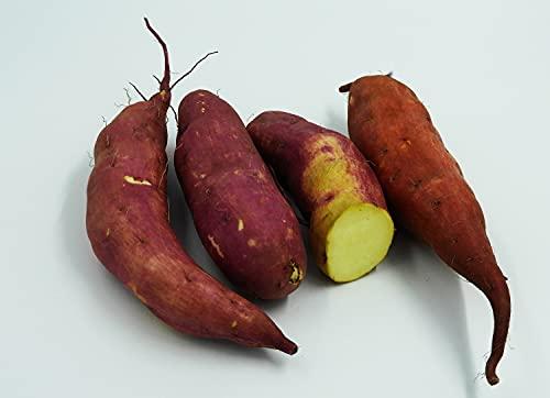 Frische weiße pfälzer Süßkartoffeln...