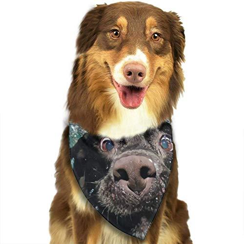 Pañuelo para mascotas con diseño de triángulo, popular y divertido labrador, pañuelo para gatos pequeños a grandes
