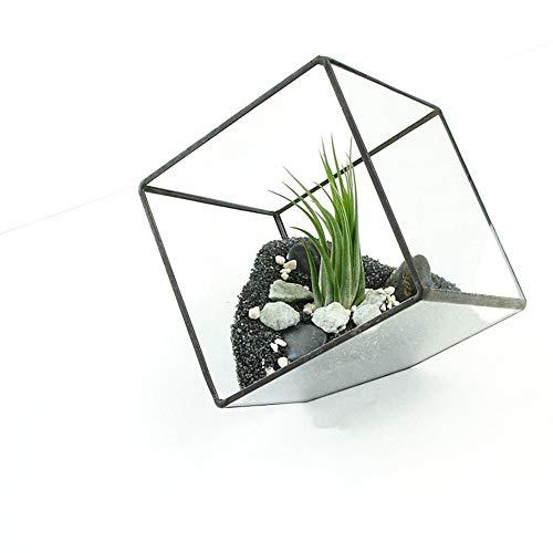 MINGZE Terrario de Cristal Casa de Flor, de Vidrio Geométrica Cristal Adorno Hogareño para Decoración Sobremesa para Casa Oficina Balcón Patio y Hotel (10 * 10CM, Negro Lata)