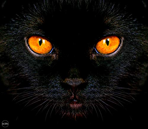 TEXTIL TARRAGO Fouta Estampado Gigante estampacion Digital fotografica 4D 210x240 cm 100% Algodon Gato Negro