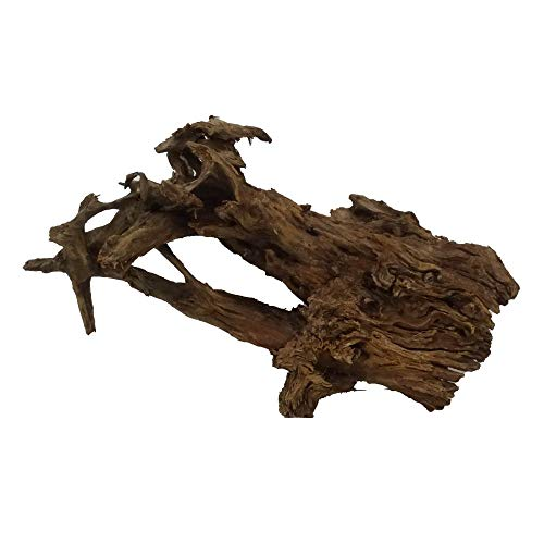 XXL Mangrovenwurzel Nr.2646 Aquarium Wurzel Mangrove Holz Deko Aquascaping Dekoration Landschaft Moos Natur Echtholz