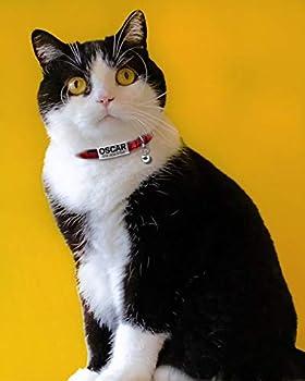 Joytale Collier pour Chat Personnalisable avec Clochette et Cravate,Colliers Identité Chats Gravé avec Nom et Telephone,Rouge