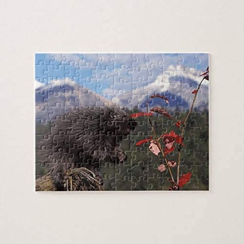 Porcospino comune che si nutre di un pennello alto Mirtillo rosso 500 pezzi Puzzle, puzzle per adulti e bambini Puzzle Decompressione intellettuale Giochi divertenti per famiglie