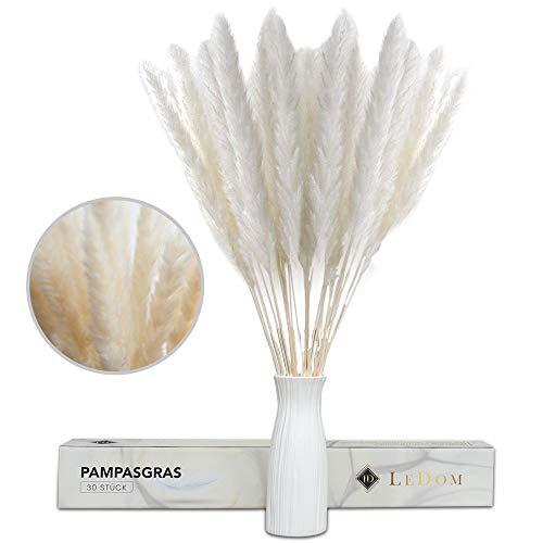 Generisch 30x Weißes Pampasgras getrocknet groß/White Luxury Pampas/Pampasgras Strauß mit hohe Vase für Pampasgras weiß – Trockenblumen gemütliche Deko Herbst – Grosses Pampasgras - Pampasgras Strauß
