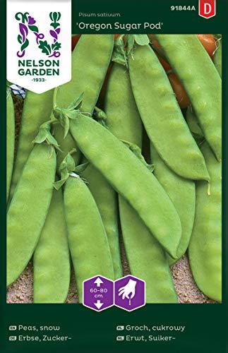 Zuckererbsen Samen für Gemüsegarten - Nelson Garden Saatgut Zuckerschoten (88 Stück) (Einzelpackung)