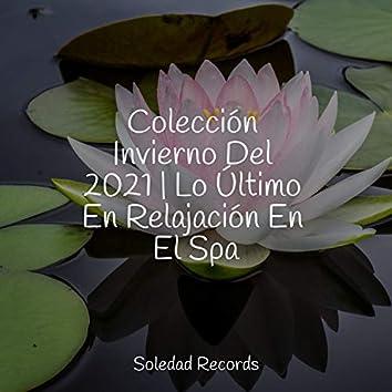 Colección Invierno Del 2021 | Lo Último En Relajación En El Spa