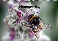 Hummelflug (Wandkalender 2022 DIN A2 quer): Hummeln sind faszinierend. Ueberzeugen Sie sich selbst von ihrer Schoenheit. (Monatskalender, 14 Seiten )