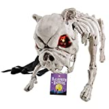 Halloween Haunters Barking Skeleton Dog Prop Decoration with Flashing Red LED Eyes - Menacing Vicious Growling Skull Face Pet Bull Doggy, Spiked Collar, Leash - Haunted House, Entryway Party Display
