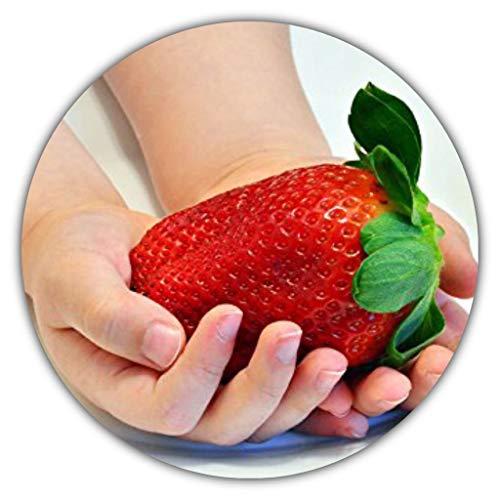 Fraises géantes - Fragaria Ananassa - 150 graines - La plus grande fraise du monde - Bon goût - Riche en vitamines