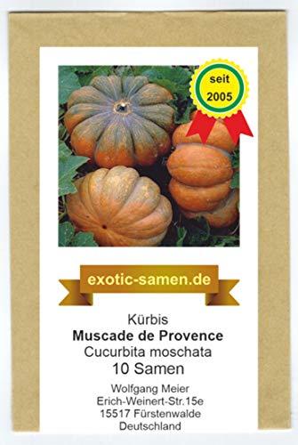 Muskatkürbis - Speisekürbis - Muscade de Provende - 5-10 kg - 10 Samen