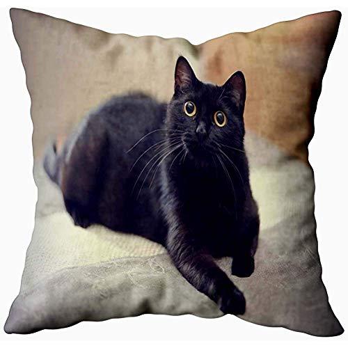 July kussenslopen, huishoudkussen soft kussenslopen The Black Cat Yellow Eyes Lies Double Printed