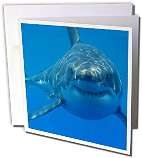 3dRose Underwater Great White Shark - Greeting Cards, 6 x 6 inches, set of 6 (gc_108355_1)
