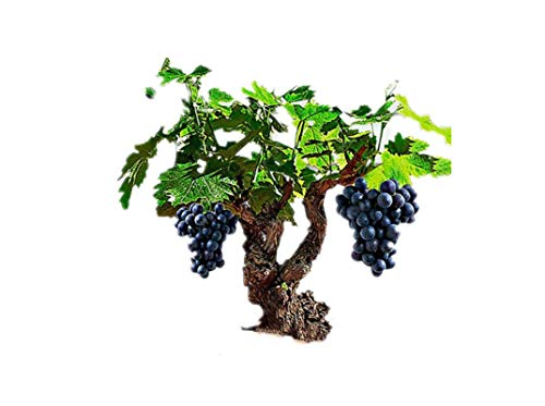 KINGDUO 50Pcs/Pack Vigne Graines Bio Fruits Sucrés Plein Air Semences Les Plantes Grasses, Indoor Bonsai-3