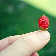 ShopMeeko Seeds:500 pcs/Bag Mini Strawberry Potted Rare Small Child Fragaria ananassa L. Bonsai Pot Fruit for Home Garden Plant : 1