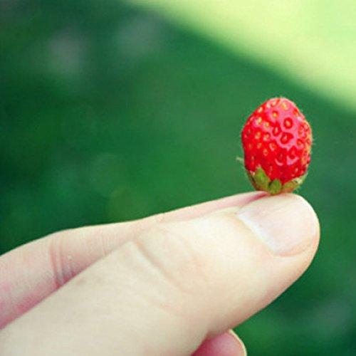 500 pcs/sac mini-graines de fraises en pot Rare petit enfant Fragaria ananassa graines de fruits pot de bonsaïs L. pour plantes de jardin à la maison 1