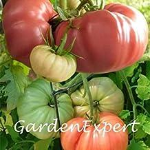 Vista 100 pcs Mix-Couleur Graines De Tomates De Jardin Coloré Rose Belgique Graines De Tomates Fruits et Légumes Graines Maison Jardin Bonsaï Plante DIY
