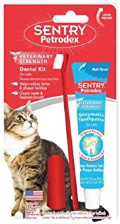 Best cat and toothbrush Reviews