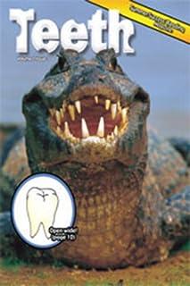 Summer Success Reading: Theme Magazine 3, 5-Packs Grade 1