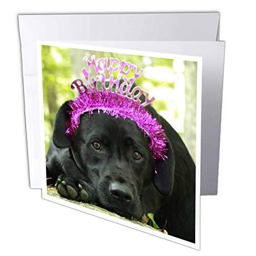 3dRose Happy Birthday Wishes Dog Black Lab Labrador Retriever - Greeting Card, 6 by 6-inch (gc_300647_5)