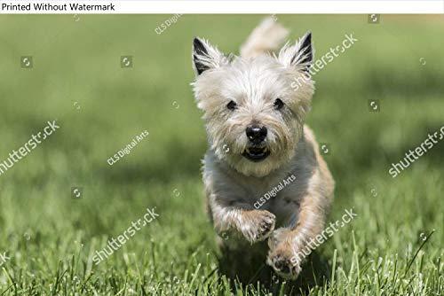 KwikMedia Poster of an Energetic Dog Running Towards...