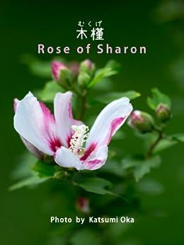 [岡 克己]のRose of Sharon