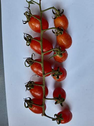 Semillas de tomate con fecha y novedad. !-