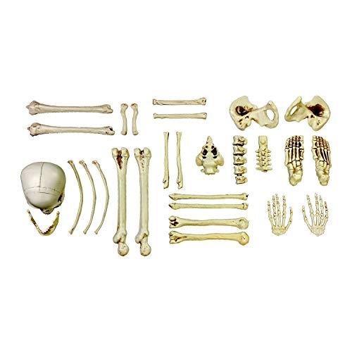 Halloween Haunters 28 Piece Bag of Plastic Life Size Skeleton Skull Bones Prop Decoration - Scary...