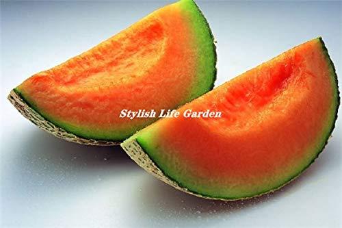 20 stuks Super Big Sweet Honey-dauw Meloen planten Hami Melon Fruit Heirloom Cantaloupe bonsaiinstallatie Voor Home Garden: 13