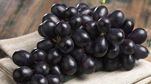 graines de gros Green Grape fruit doux et délicieux raisins de fructification bonsaïs Villa 100 graines/Pack 8