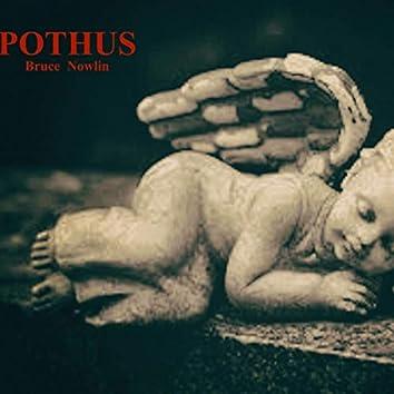 Pothus